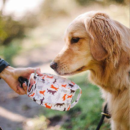 美國 P.L.A.Y.® 寵物生活 OUTDOOR 露營系列 外出寵物碗