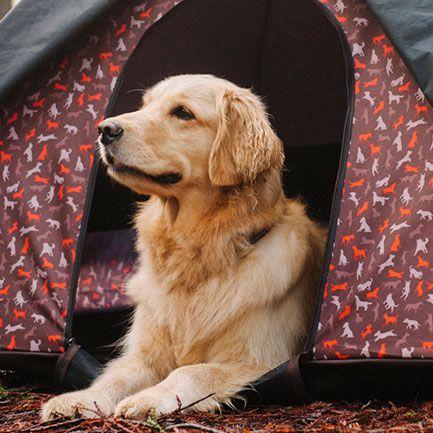 美國 P.L.A.Y.® 寵物生活 OUTDOOR 露營系列 寵物專用帳篷
