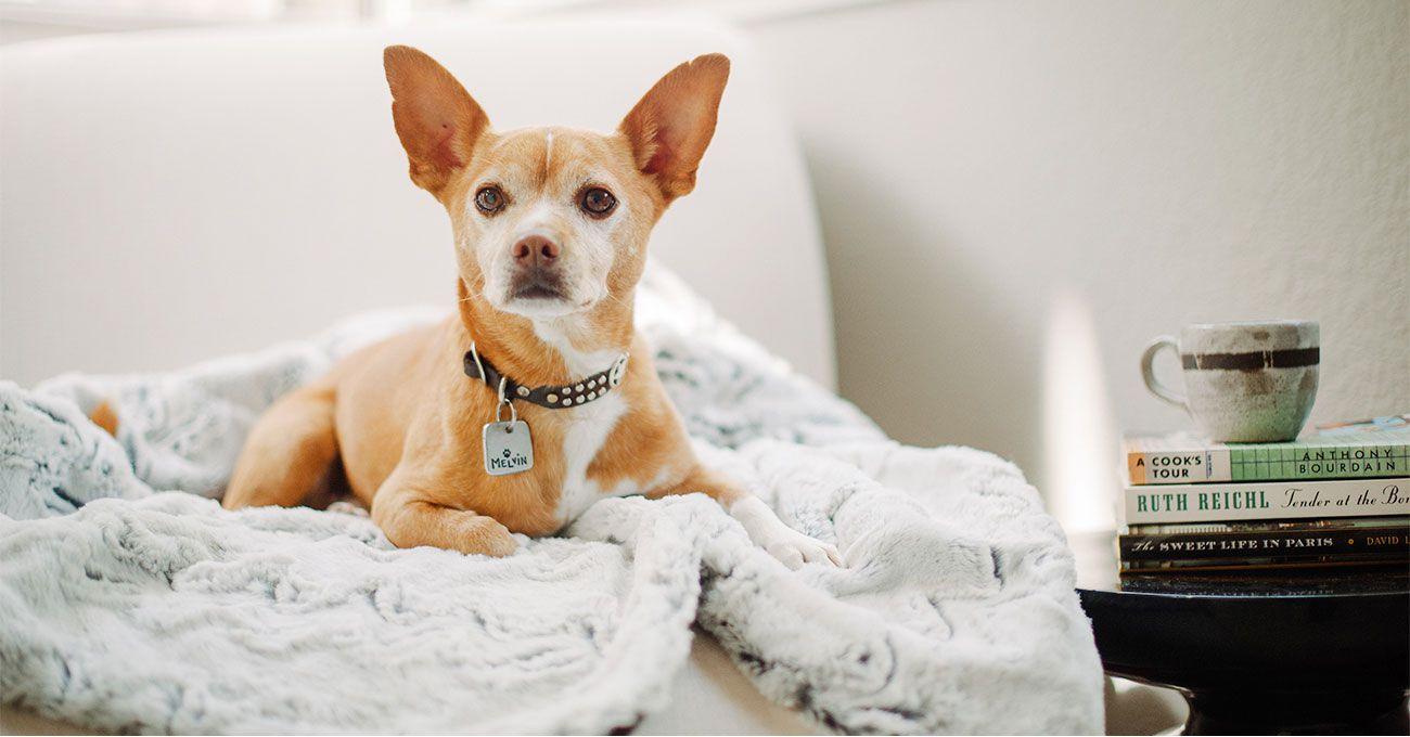 美國 P.L.A.Y.® 寵物生活 HOME 家居系列 超柔軟依偎睡墊