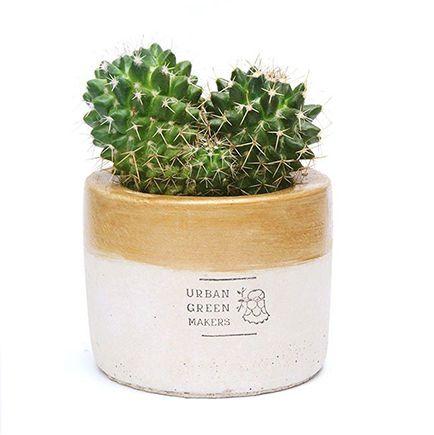 日本 URBAN GREEN MAKERS 桌上型綠意盆器