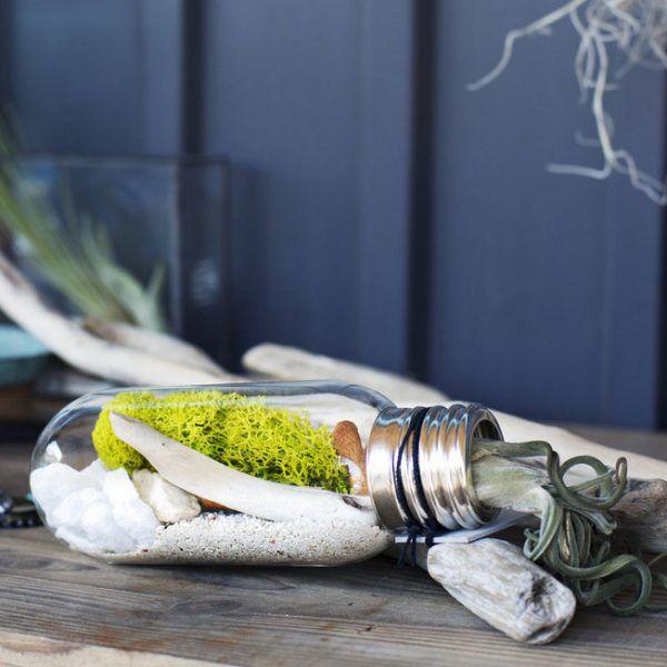 Bulb-terrarium-kit-from-Urban-Green-Makers-6