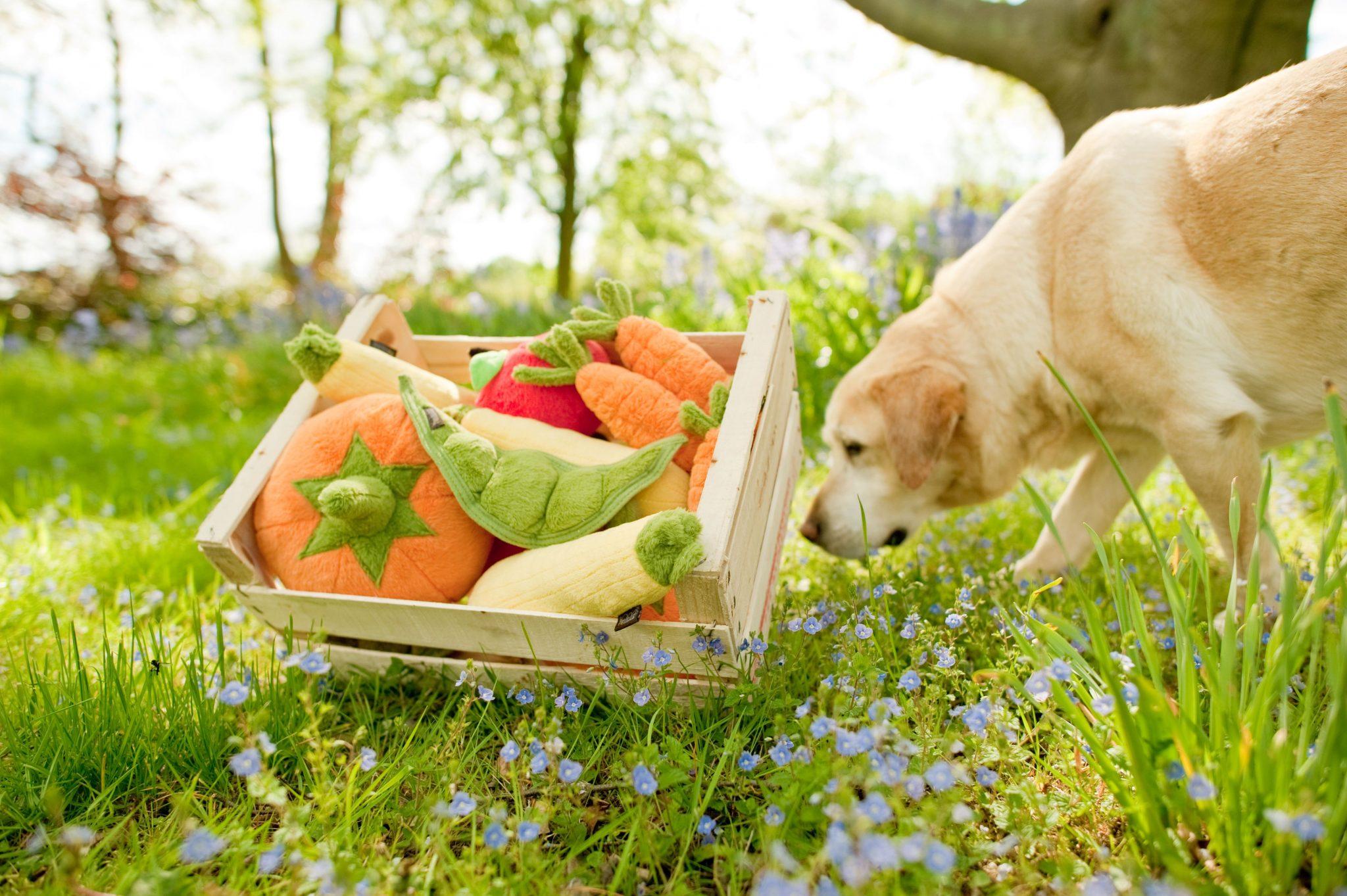 美國 P.L.A.Y. 玩具系列 健康蔬果 胡蘿蔔