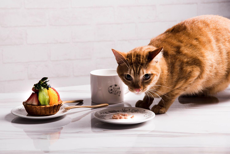 FMT我的菜 單身幸福 慵懶貓咪 馬克杯盤組