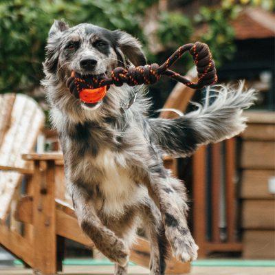 PLAY露營野趣玩具_拔河球繩 (2)