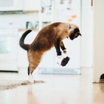 PLAY狂野貓咪-(4)