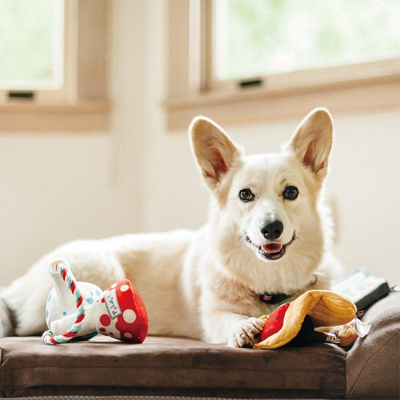 美國 P.L.A.Y. 玩具系列 開學季 小狗畫具