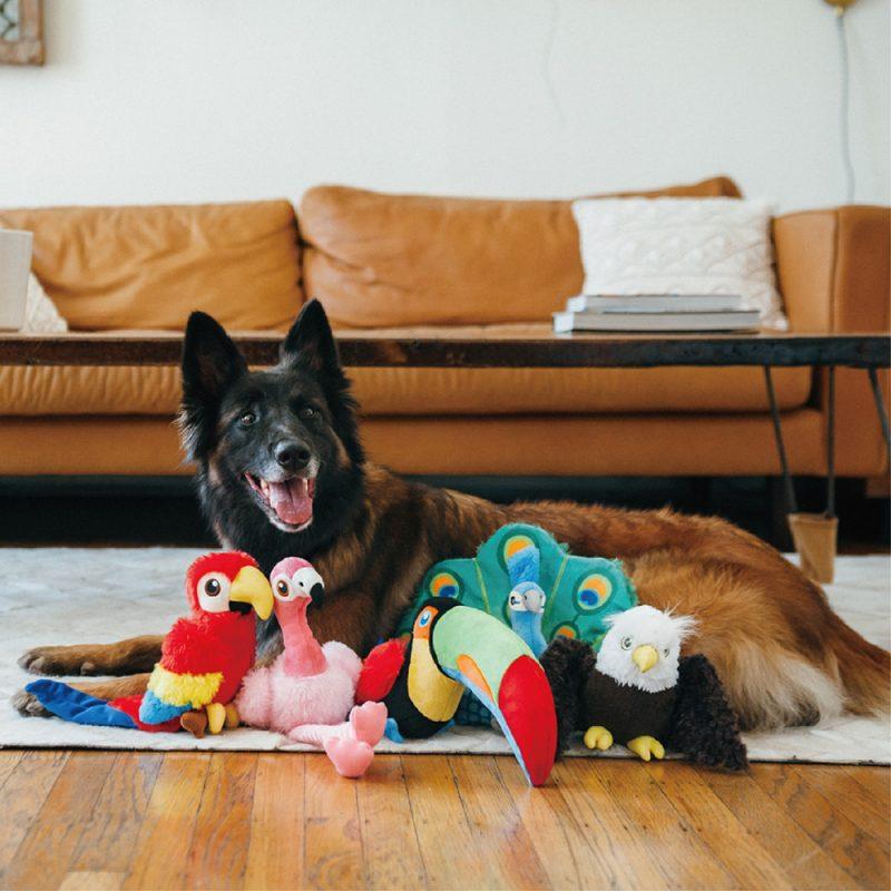 美國 P.L.A.Y. 玩具系列 魅力珍禽 提托大嘴鳥