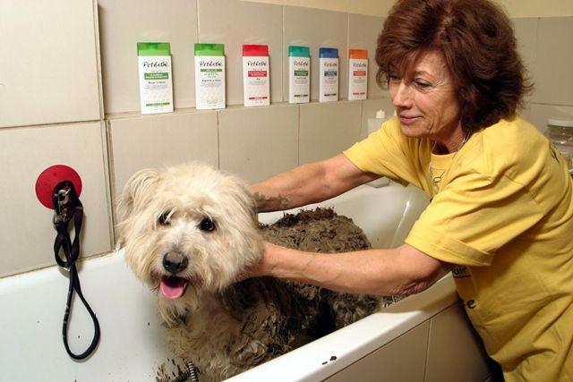 貝特愛思 Pet Esthé® 專業用洗劑 白毛犬專用 3L